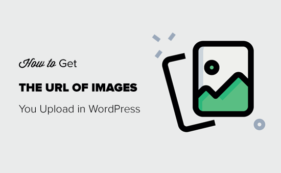 how-to-get-the-url-of-images-you-upload-in-wordpress